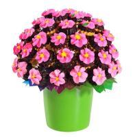 Flody Yenilir Kurabiye Çiçeği